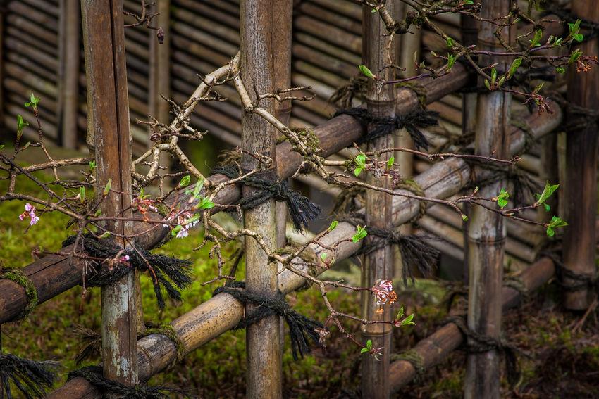 Portland Japanese Garden Portland, Oregon Asian Culture Asian Garden Beauty In Nature Garden Photography Japanese Culture Japanese Garden Oregon Pacific Northwest  Portland Japanese Garden Portland, Oregon Waterfall