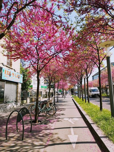 Street Photography Springtime Springtime Blossoms Tree Flower Sky Flower Tree Bicycle Rack Diminishing Perspective Empty Road Road Marking The Way Forward Pink Pathway Treelined