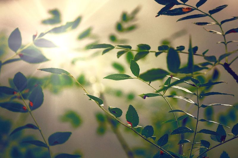 Leaf Plant Growth Nature No People Day Beauty In Nature Outdoors Close-up Sky Freshness Minimalism Abstract Light And Shadow Light Green