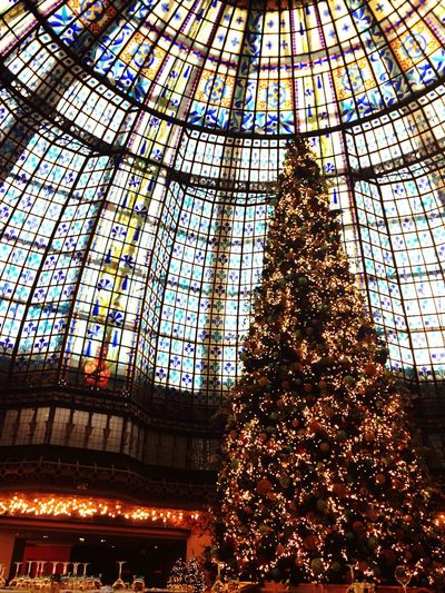 Light And Reflection Paris Printemps Haussmann Coupole Galeries Lafayette Haussmann Tree Lights