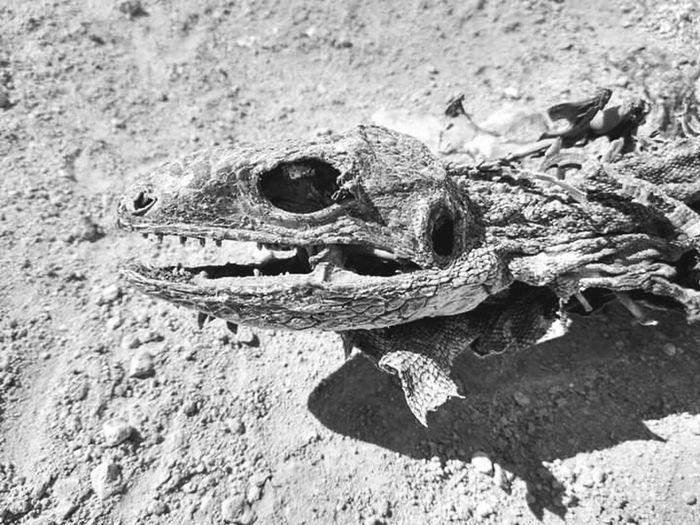 Reptile Fossils