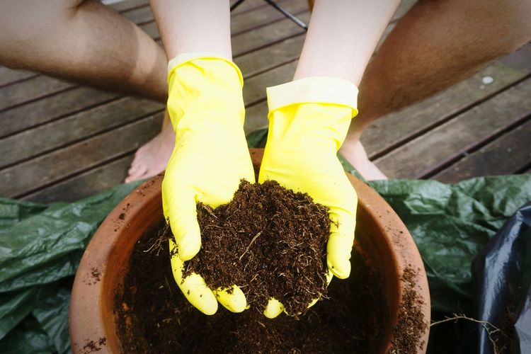 Low section of man putting soil in pot