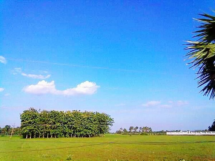 Sun at it highest Colourful Sun Bright Colors Trees And Sky Grass And Sky Grass And Trees Blue Sky Eye Catching