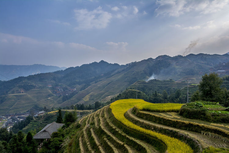 Agriculture Beauty China Environmental Conservation Field Happiness Landscape Longji Rice Terrace Miles Away Mountain Mountain Range No People Outdoors Rice - Cereal Plant Rice Paddy Social Issues Terraced Field Perspectives On Nature
