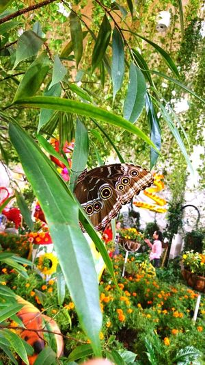 Beautiful Butterfly One Insect Nature Plant Animals In The Wild Beauty In Nature Outdoors Day Flower EyeEmNewHere Brown Color Textured  Butterfly ❤ On A Tree Freshness Pattern The Great Outdoors - 2017 EyeEm Awards EyeEmNewHere BYOPaper! Live For The Story