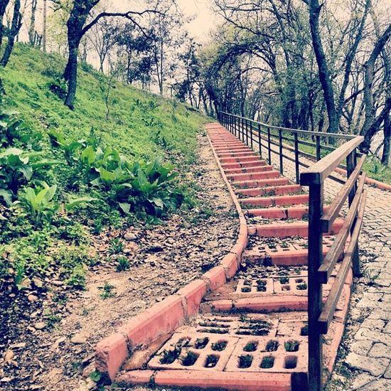 Yağmur başlangıcında oluşan renklerin muhteşem ambiyansı ... Dersim Tunceli Munzur Merdivenler bahar renkler colours colourful stairways tree nature