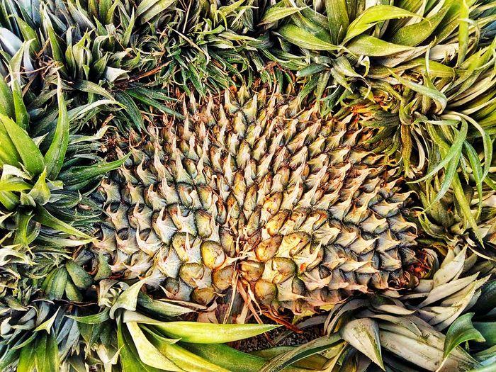 Close Up Close Up Photography Close Up Collection Close Up Fruit Fruit Photography Fruit Collection Pineapple Pineapple Fruit Fruit Nature Flower