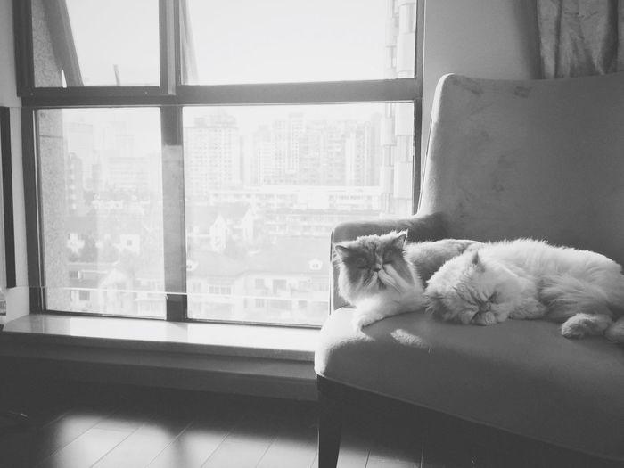 Cat Cats Xiaobai Xiaohui