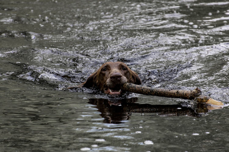 Portrait of dog swimming in lake