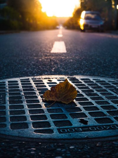 Nature Leaf Close-up Plant Part Street Sunset No People Road City Sunlight Focus On Foreground Day Sky Selective Focus Outdoors Autumn Metal Transportation Change Plant