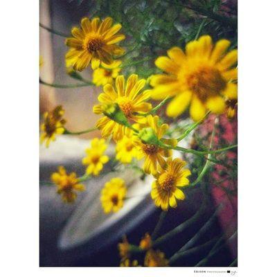 【 視角 】 可曾問過自己 為何我一無所有 彎腰蹲低 會讓你感覺 這世界其實你都擁有 只是角度 只是態度 沒有嘗試改變 視角改變 如在花盆後方的 小黃花 你會有心的發現 手機攝影 G4 Flower 365Snap