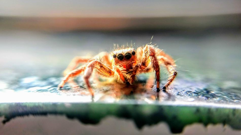 EyeEm Selects Spider One Animal Animals In The Wild Animal Wildlife Animal Themes Spider Web Day Jumping Spider No People Outdoors Nature Animal Leg Close-up EyeEmNewHere