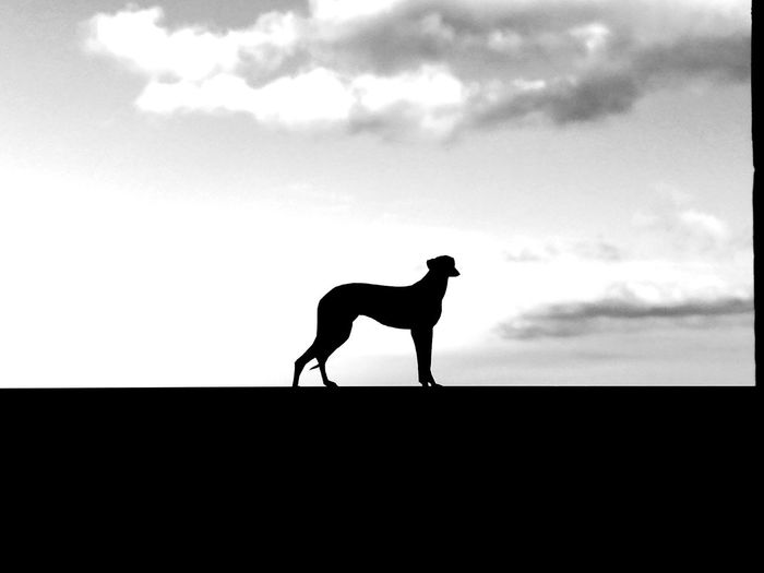 Side view of silhouette man standing against sky