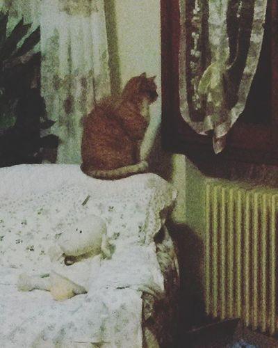 Romeo il Guardone Cat Miao Meow Gatto Rosso Gattone Redcat Espressione Catoninstagram Bigcat Gattorosso Gattogrosso Morbidoso 😚 😚 😚 Mycat LeChat Posa Tigrotto Tiger MyTiger Ilmiotigrotto beautiful