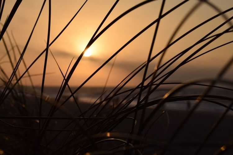 Sunset Sky No People Nature Sea Beauty In Nature Grass Sun