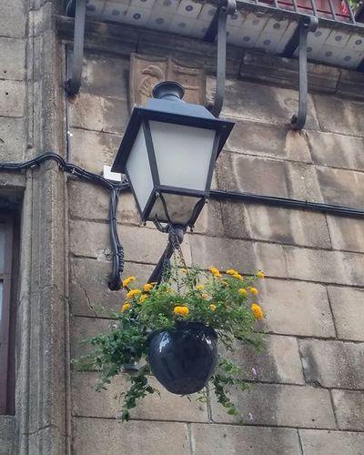Farol Streetlight Katuvalo Lampadaire Pottedflowers Floresentiesto Fleursenpot Rukkukasvi PobleEspanyol Puebloespañol Montjuic Barcelona Bcndreamers Bcnexplorers Thebarcelonist Igersbarcelona Igerscatalunya Best_lantern_archive