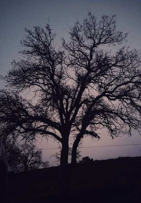Tree Silhouette Branch Nature Growth Sky Outdoors Beauty In Nature Close-up No People Low Angle View Tranquility Day