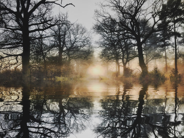 Winter morning light Tree Reflection Water Plant Tranquility Beauty In Nature Sky Tranquil Scene Scenics - Nature No People Lake Nature Non-urban Scene Forest Bare Tree Idyllic Day Land Growth Sun Outdoors