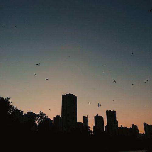 Seja livre como o vôo de um pássaro. Vscocam Vscocambr Achadosdasemana Eutonanuvem Jardimdetalentos Umceudetalentos Igersbrasil Muraldefotografias Ummardetalentos Arteemfoco Photography Photo Fotografeumaideia Instagram Instagrambrasil Sky Skyblue Sunset Sun Afternoon Pordosol Landscape Fly Birdsofinstagram Londrinando