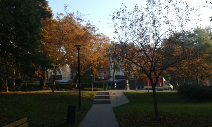 Autumn Morning Light Morning Sunshine