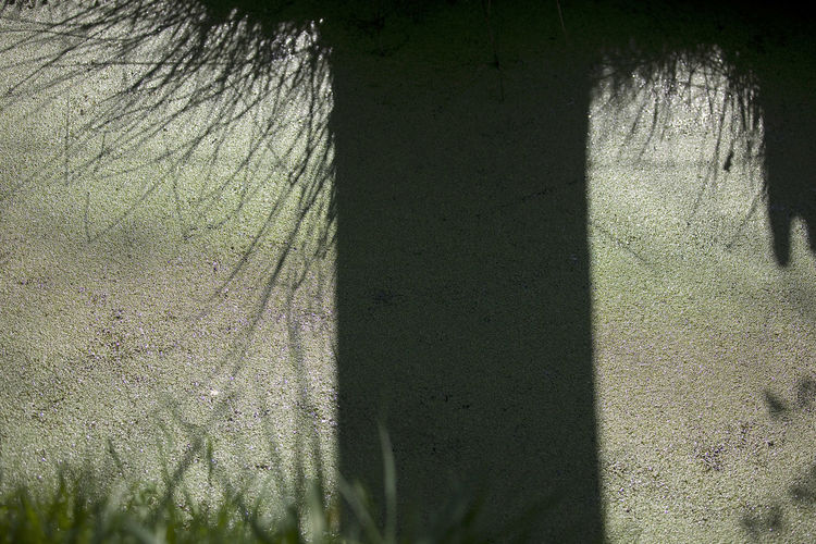 Close-up of shadow on grass