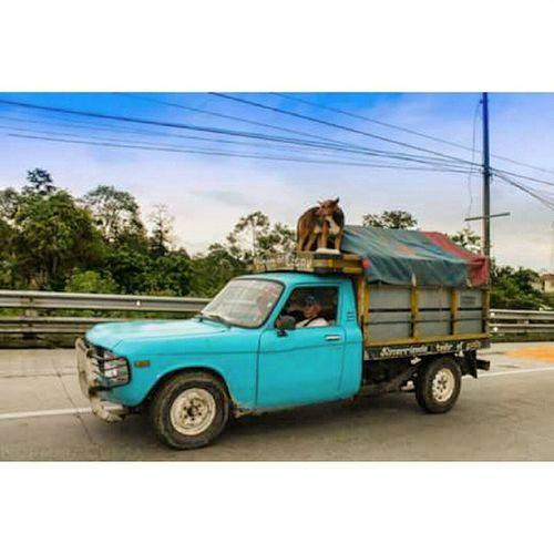 AllYouNeedIsEcuador Canon Canonecuador Canon_official Ecuador Ecuadoramalavida Ecuadorpotenciaturistica Ecuadorian Fotografias Fotografosecuador SantoDomingodelosTsachilas ProvinciaTsachila Dogs Dogslife