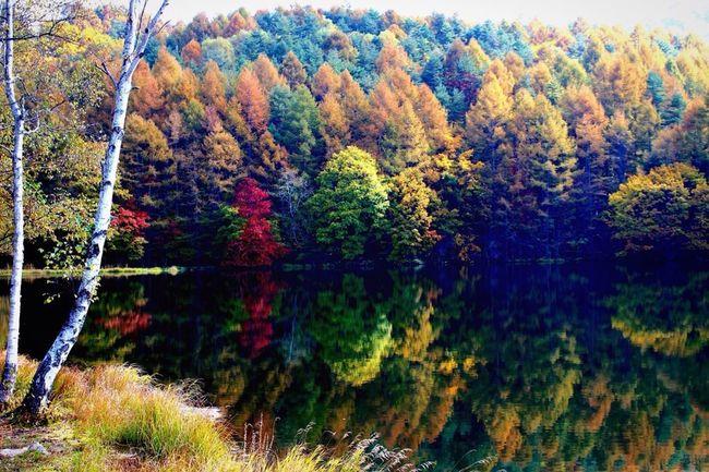 御射鹿池 Nature Pond Autumn Fall 反射 Reflection Water Reflections 紅葉