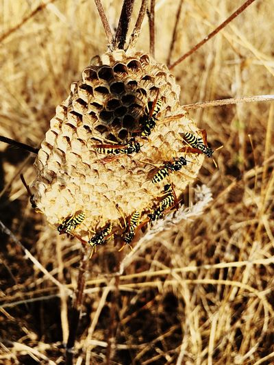 Outdoors Hive Bees Close-up Plant No People Focus On Foreground Nature Day Beauty In Nature Growth Dry Outdoors Fragility Vulnerability  Selective Focus Sunlight Dried Plant Leaf Plant Part Tranquility Hanging Dead Plant