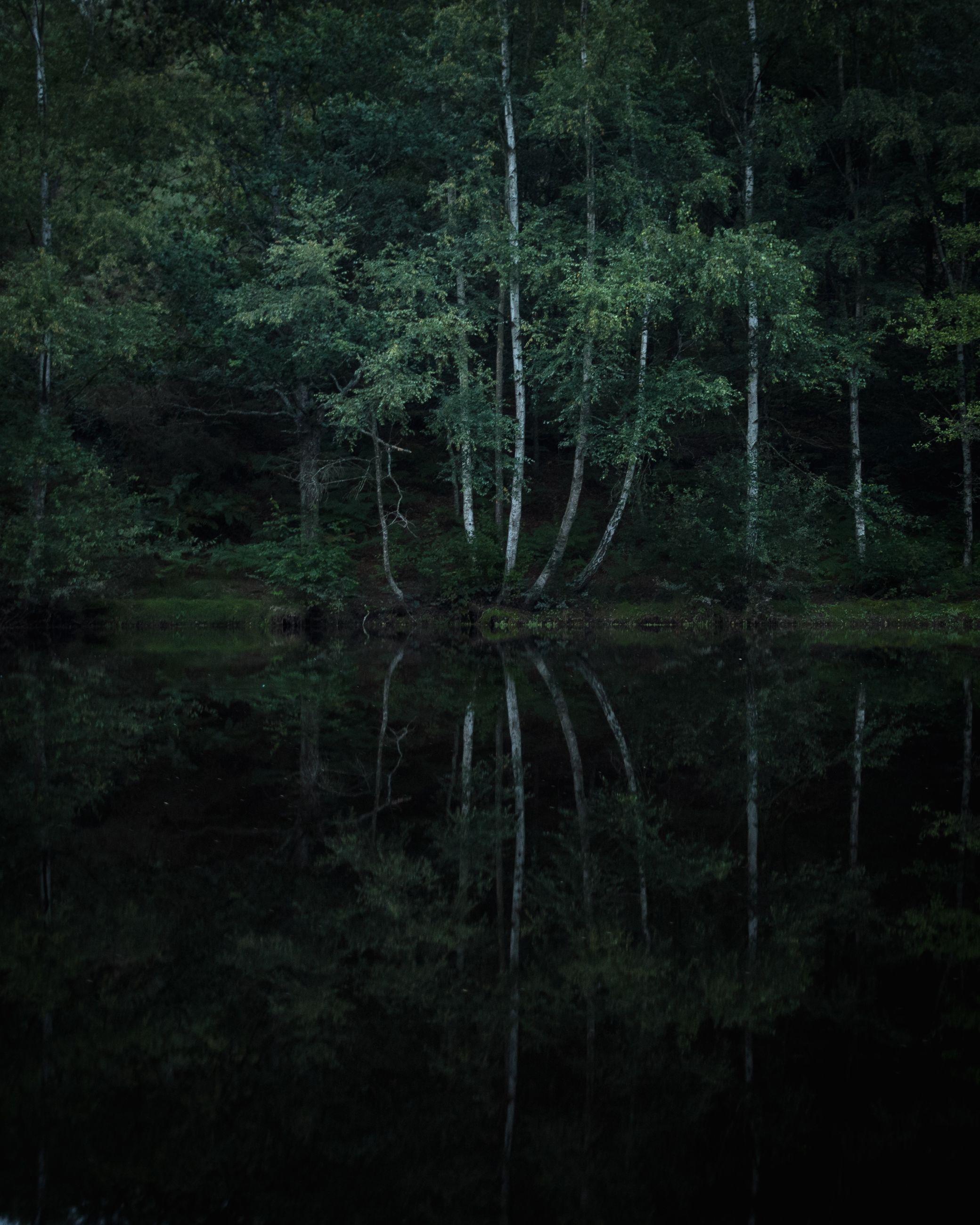 tree, plant, forest, land, no people, tranquility, water, nature, growth, beauty in nature, woodland, reflection, lake, scenics - nature, tranquil scene, non-urban scene, outdoors, day, waterfront, swamp