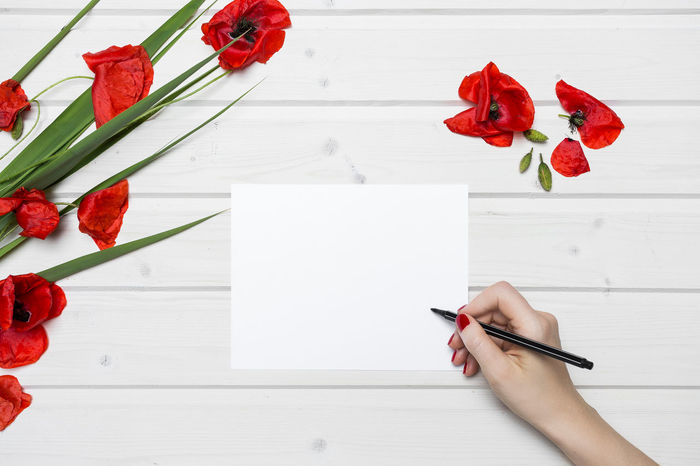 White ship deck tabletop scene with female hand writing on a white blank paper surrounded by poppies Red Blank Drawing Female Hand Writing Flat Lay Flower Flower Head Flowers Freshness Holding Human Hand Indoors  Paper Pencil Poppies  Poppy Flowers Real Scene Red Spring Flowers Table Tabletop View From Above White Color White Paper White Table