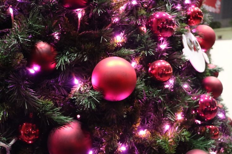 Close-up of christmas ornament on tree