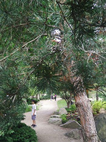 Pokemon hunting Tree Nature Kid