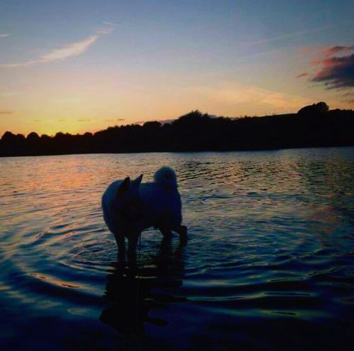 Simba ❤️ Tranquil Scene Sunset Water Animal Themes One Animal Dog Cute Pets Lake Animals Nature Animal Photography Domestic Animals Sky Animal Love Mammal Akita Pets Beauty In Nature No People Day