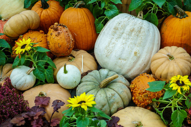 Various type of pumpkin Autumn Choice Close-up Day Food Food And Drink Freshness Gourd Halloween Healthy Eating No People Outdoors Pumpkin Squash - Vegetable Variation Vegetable