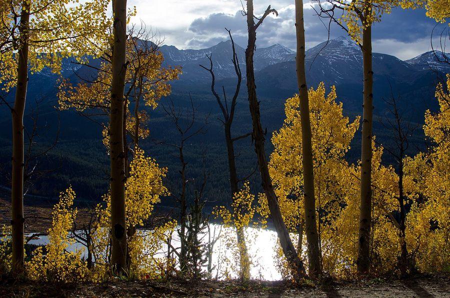 Aspens Aspen Trees Colorado Lake Fall Autumn Yellow Fall Color