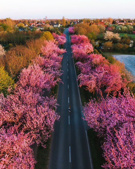 High angle view of pink flowering plants by trees in city