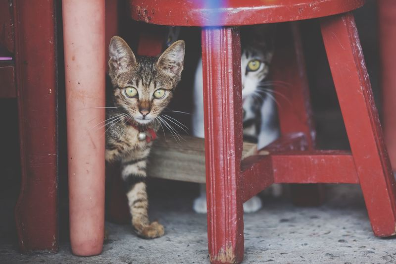 Cats Underneath Chair