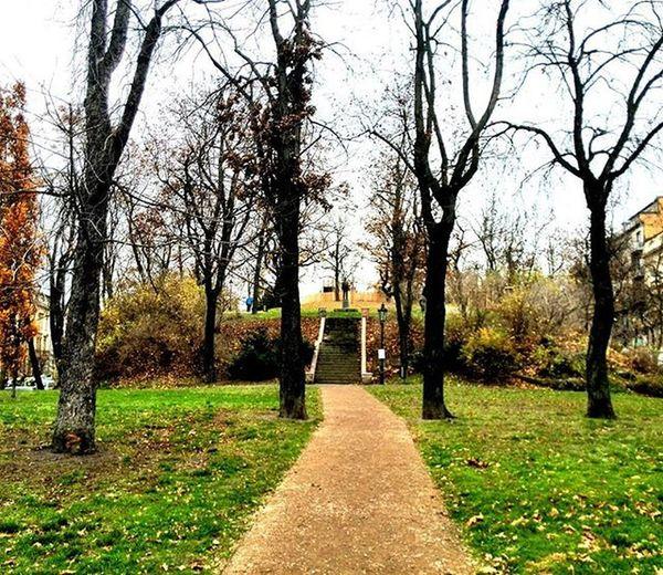 Kam tě cesta zavede Sadynaskalce Park Cesta Stromy Ctverice Socha Schody Stromoradi Podzim Skalka Trees Way Fourtrees Fall Autumn Stairs Statue Igerscz