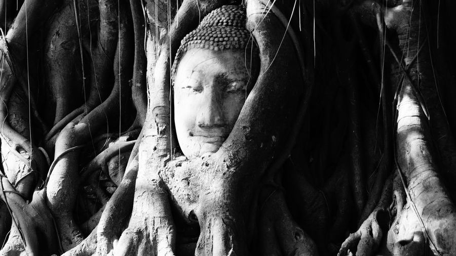 Close-up of buddha statue in tree root