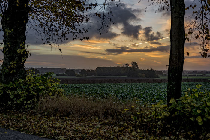 Farmlandscape Clouds And Sky Early Morning Farmlandscape Field Green Gut Rohlstorf Morning Light Morning Sky North Germany Plants Schleswig-Holstein Sunlight Sunset Trees