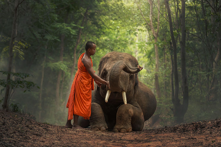 Young elephant and Monk in forest . Adult African Elephant Animal Trunk Animal Wildlife Animals In The Wild Day Elephant Forest Lifestyles Mammal Men Nature Outdoors People Plant Real People Togetherness Tree Tusk Walking