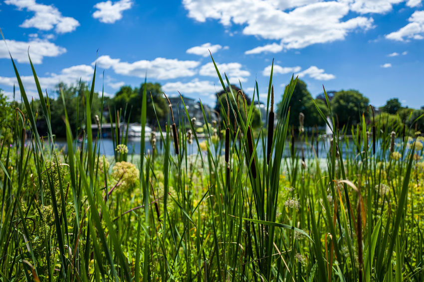 Hamburg Alster area Agriculture Beauty In Nature Blade Of Grass Close-up Cloud - Sky Day Field Focus On Foreground Grass Green Color Growth Land Nature No People Outdoors Plant Scenics - Nature Sky Tranquil Scene Tranquility Water