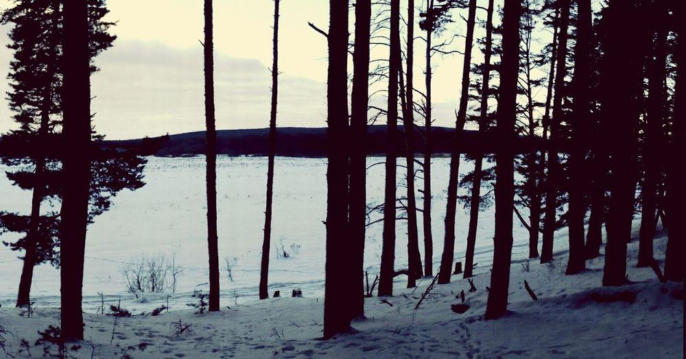 Belgorod Region Absenteeism Winter Forest