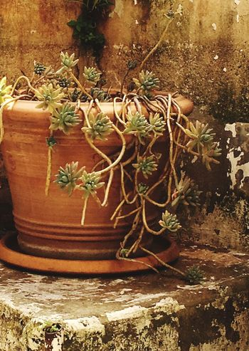 Plant Growth Potted Plant Nature No People Day Close-up