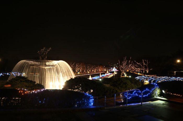 Illumination Winter2015 Xmas2015 立川昭和記念公園