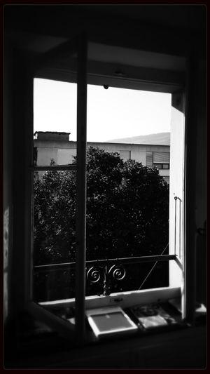 breathe it in... Summer Morning Blackandwhite Monochrome