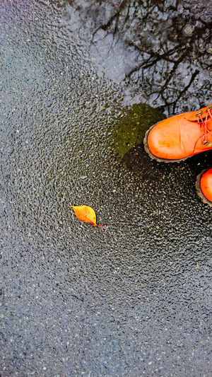 Autumn Leaf Rainy Days Shoes Shoeselfie My Best Photo 2015 Xperia Z4 Reflection Puddle XPERIA The Street Photographer - 2016 EyeEm Awards Japan Fall Beauty Fall Colour Of Life Autumn Mood