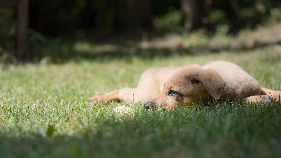 Blick Animal Animal Photography Dog Dogslife Domestic Animals Dream Dreamer Dreaming Eye Green Light And Shadow Pet Pup Relax Relaxing Time Time-Out View Weed