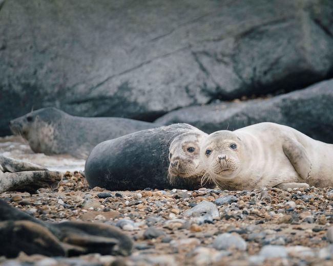 View of animal lying on rock