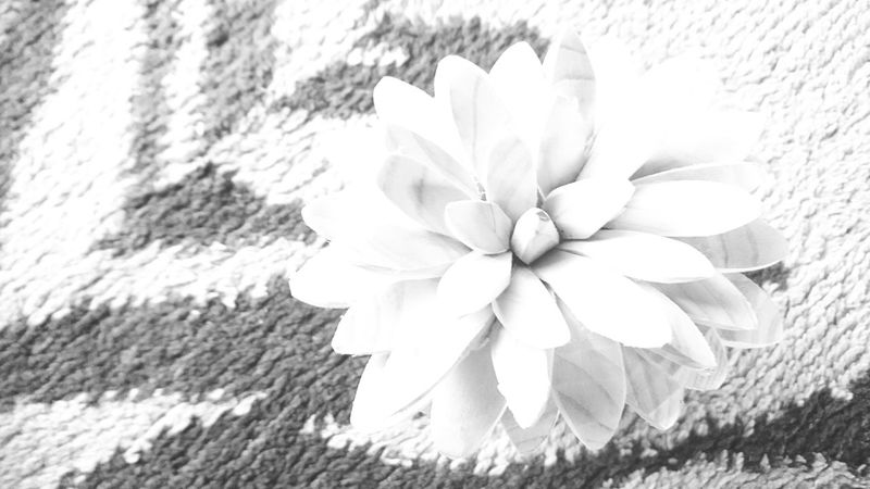 草花 Daisy Stamen Whitewashed Single Flower Blooming Pollen Gerbera Daisy In Bloom Hibiscus Pistil Lily Botany Plant Life Passion Flower Osteospermum Cosmos Flower Day Lily Blossom Crocus Gazania